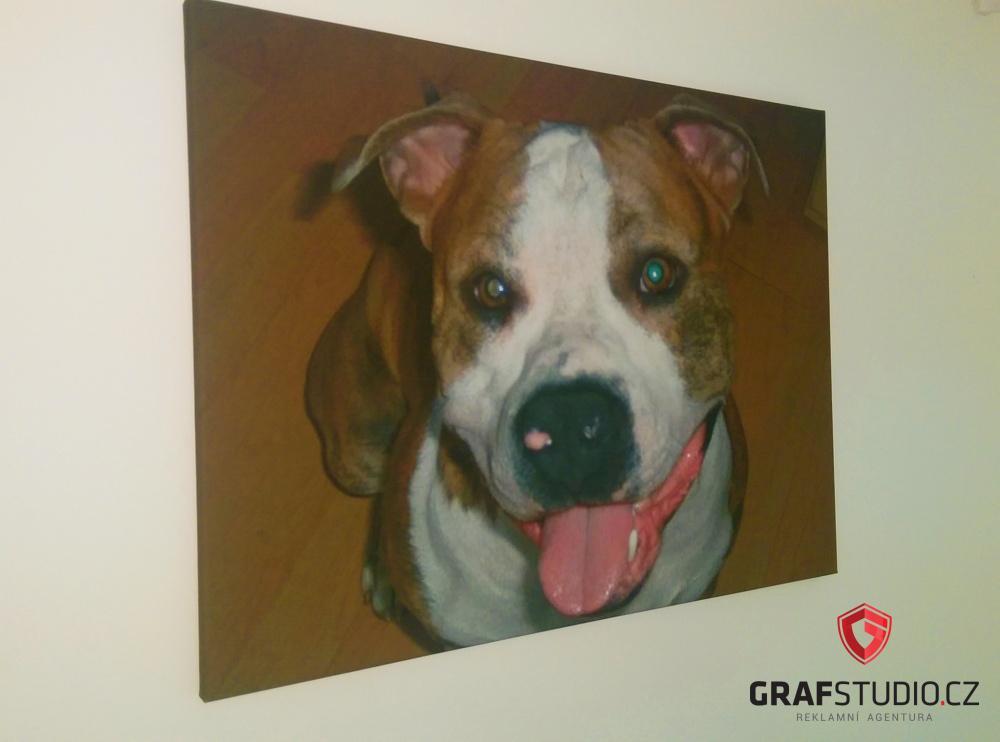 fotoobraz psa na plátně
