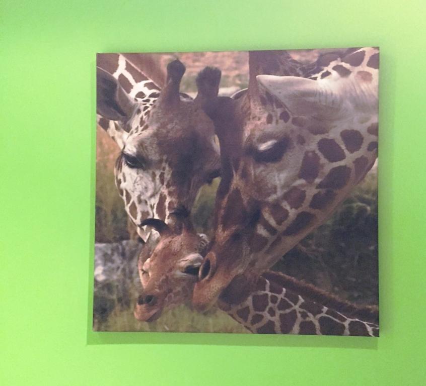 fotoobraz žiraf na plátně